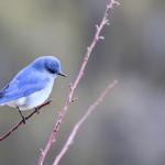 Photography Basics for Birders Workshop