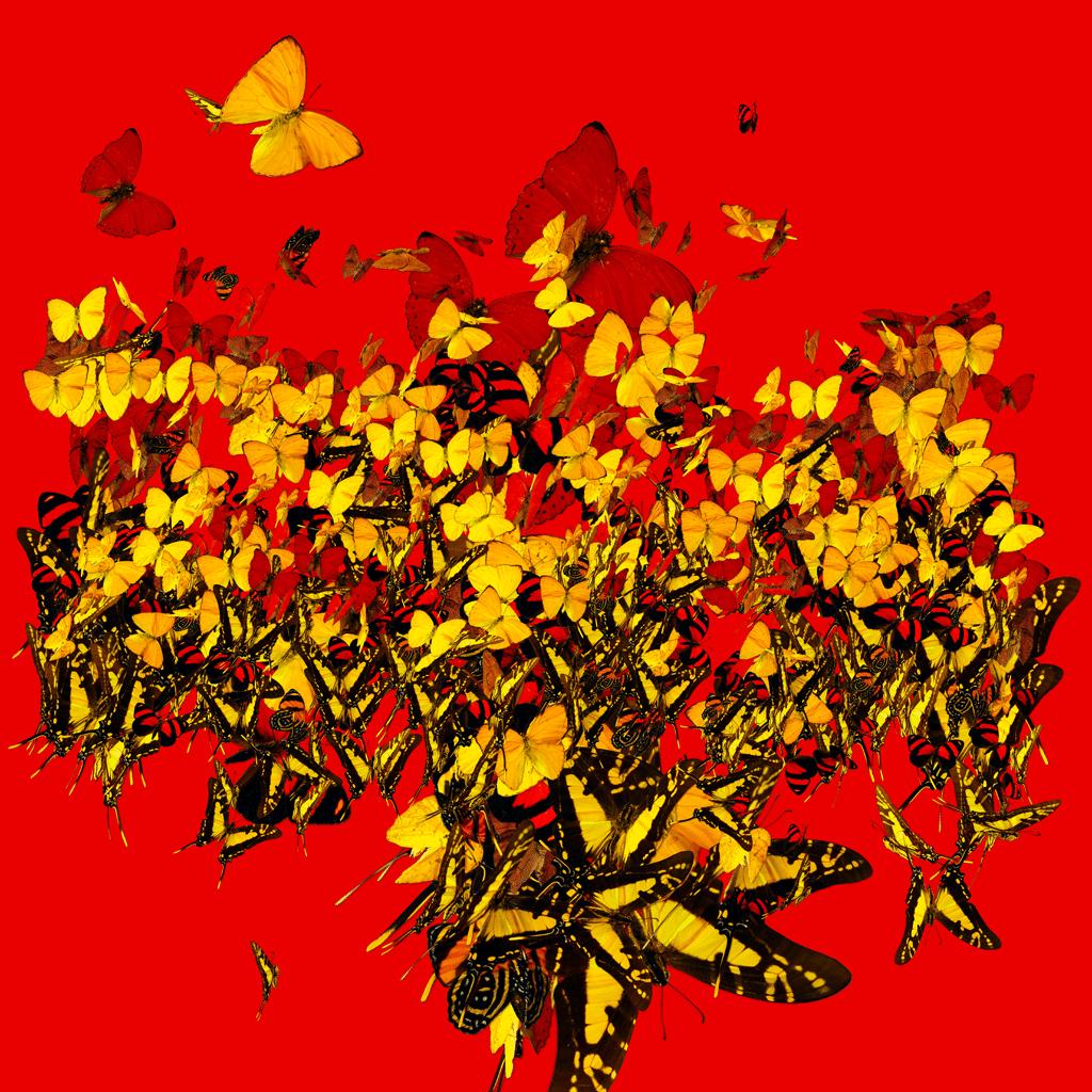 butterfly_oil