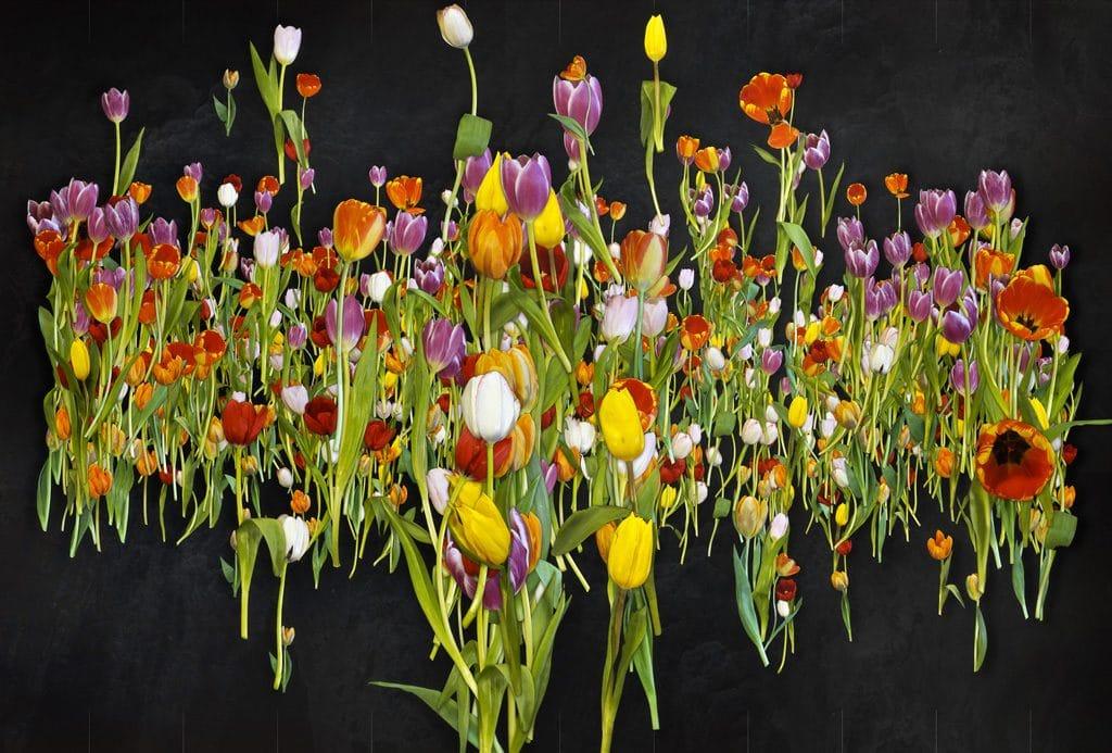 oil_tulips